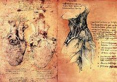 Leonardo da Vinci - Anatomical drawing of hearts and blood vessels from Quaderni di Anatomia vol 2; folio 3v