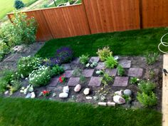 perennial flower and herb  garden in its first year