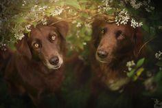 Voici des photos de chien dans de magnifiques milieux naturels