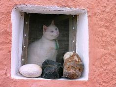 Cat at window    Pink facade with white cat at window. Oia, Santorini island, Cyclades, Greece