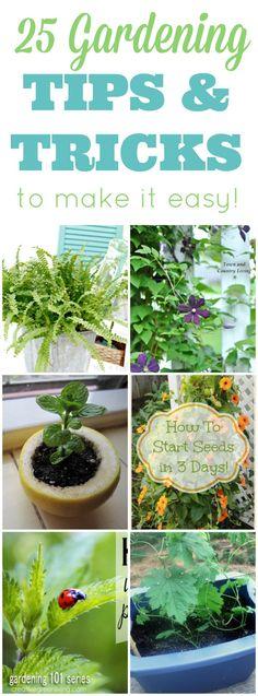25 Amazing Gardening Tips And Tricks