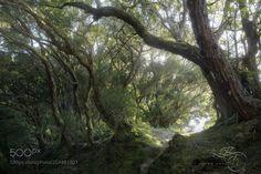 Breathing Forest by efossati via http://ift.tt/2oXsf6w