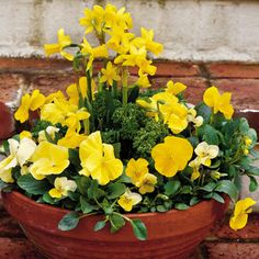 Website with 82 different container ideas - enjoy nonstop color all year long with design ideas and plant suggestions to create beautiful pots for your porches and patios.  This pot has tall yellow daffodils, medium-size pansies, and small violas - a happy mix in this terra-cotta planter.