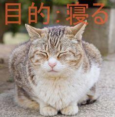 Facebookから入る人は失敗し、目的から入る人が成功する  http://8en.jp/socialmedia/life_purpose/