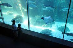 Two Oceans Akwarium