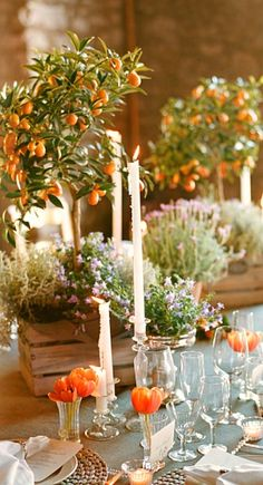 miniature fruit tree centerpieces.....