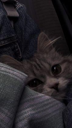 Funny Cat Wallpaper, Wallpaper Iphone Cute, Cute Cartoon Wallpapers, Cute Baby Cats, Kittens Cutest, Cute Babies, Cute Kawaii Animals, Cute Little Animals, Cat Icon