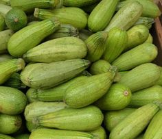 Half Long White Zucchini a.k.a. Bianca de Trieste Italian Heirloom Early producer Compact zucchini Excellent rich flavor Pale green/white 46-50 days
