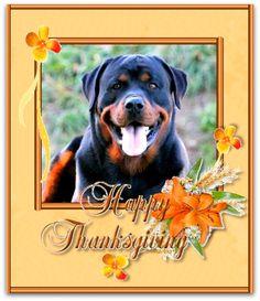 Rottweilers, Labrador Retriever, Dogs, Animals, Labrador Retrievers, Animales, Animaux, Rottweiler, Pet Dogs