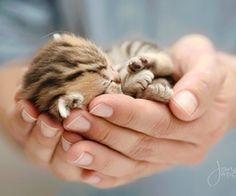 /spaceebound | via Tumblr Precious tiny kitten