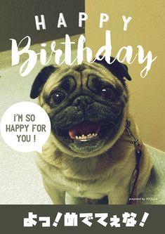 可愛いパグのお誕生日おもしろ画像