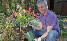 Blütenpracht für Kurzentschlossene: Containerrosen pflanzen -  Wer die klassische Pflanzzeit für Rosen im Herbst verpasst hat, kann im Frühling und Sommer auf getopfte Pflanzen, die sogenannten Containerrosen, zurückgreifen. Wir zeigen Ihnen, was Sie beim Pflanzen Ihrer Rosen beachten sollten.