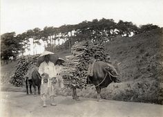 Taking loads of wood to market. Early Japanese Colonial Period postcard art/photography.