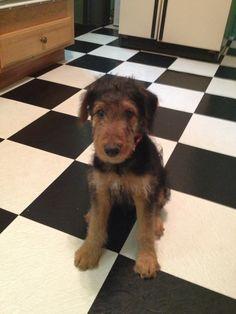 My new puppy Klaus