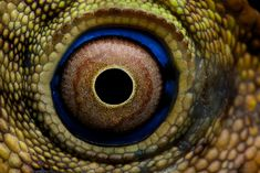 lizard eye   Flickr - Photo Sharing!
