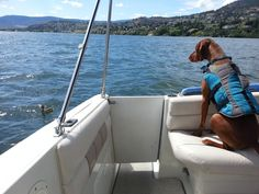 Tips and Gear for Boating with Dogs - including a video overview for great dog boat ladder solution!