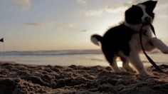 Photo Baby Animals Pictures, Cinemagraph, Dog Beach, Mammals, Dogs And Puppies, Pets, Conscience, Claude, Film