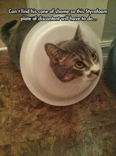 When you can't find the cone of shame...