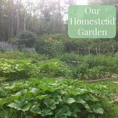 Linn Acres Farm: Tour of Our Homestead Garden