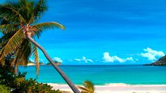 Sounds of nature, relaxing ocean waves sounds and birds singing at paradisiac tropical beach with sun, blue sky and palm tree for meditation, yoga, sleep and...