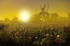 Photograph Flowers in the fog by Nicodemo Quaglia on 500px