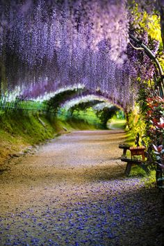 Fukuoka, Japan. Walk under the Wisteria flower tunnel of the Kawachi Fuji Garden. Visit in April or May to see the 150 vibrant plants in full bloom.