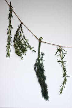 Fresh Herb Garland DIY