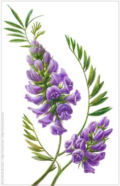 Plants by Irina Vinnik, via Behance