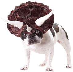 Triceratops Dog Costume Includes Triceratops headpiece with horns. Weight (lbs) 0.24 Length (inches) 12.5 Width (inches) 9 Height(inches) 1.5
