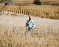 conventional corn farmers gmo seed