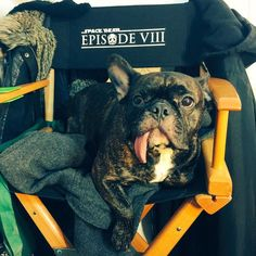 """Carrie Fisher, Mark Hamill show off pooches on """"Star Wars: Episode VIII"""" set! Carrie Fisher, Gary Fisher, Frances Fisher, Star Wars Cast, Star Wars Film, Starwars, Star Wars Timeline, Maine, Star Wars Sequel Trilogy"""