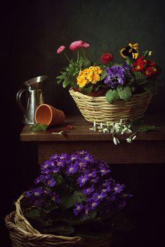 Ganj Dark Flowers, Fruit Flowers, Purple Flowers, Beautiful Flowers, Rose Vase, Flower Vases, Flower Art, Still Life Images, Still Life Flowers