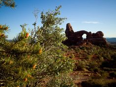 Turret Arch from North Window. Strategically placed flora makes...
