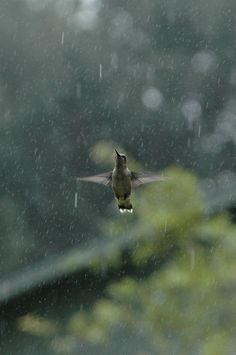 Rain Dance by MyShutter #Photography #Hummingbird #Rain