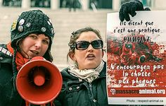 No to the Canadian Seal Hunt