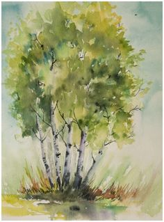 stand of birches study small | Angela Fehr watercolours