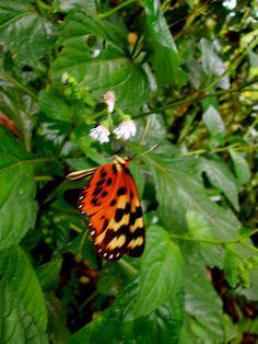 Papillon d'amour #ecuaculture #swiss