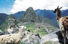 Lamas hoog in de Andesgebergte