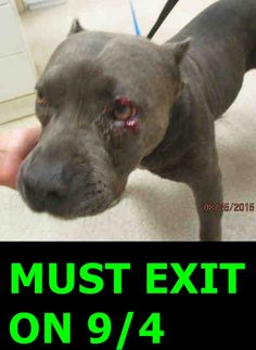9/25/ STILL THERE!!! #A1224473 (MUST EXIT ON 9/4) My name is 224473. I am a female, blue and white Pit Bull Terrier. The shelter staff think I am about 3 years old. I have been at the shelter since Aug 25, 2015. Riverside County Animal Control - Riverside Shelter at (951) 358-7387 https://www.facebook.com/photo.php?fbid=10204090990548924&set=a.10204071258855644.1073741913.1649756531&type=3&theater