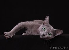 © copyright Marco Galli. Con Gatto Mordicchio by Galli Marco il fotografo dei gatti on 500px