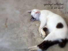 Special head twist - sleepy Cat