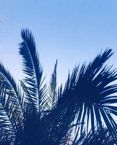 #christchurchnz #newzealand #palmtrees #vacationvibes