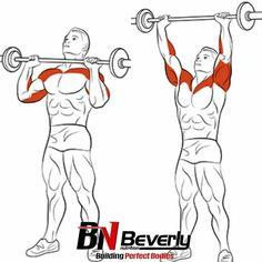 Shoulder & Traps Exercises Ejercicios de Hombros y Trapecios