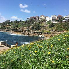 Start of the famous Bondi to Bronte coastal walk #Sydney. @lonelyplanet #lonelyplanet #pacific #ocean #coast #walk #beauty #Australia #aqua #instapic #instadaily #instatravel #mustdosydney #bonditobronte #green #travel #summer #flowers by rexcat75 http://ift.tt/1KBxVYg
