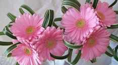 Gerbera Flowers Decor