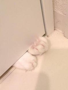 【画像】 家の脱衣所で髪を乾かしていると、扉の下の隙間から