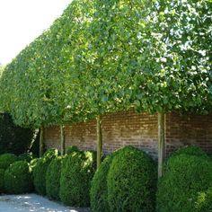 Garden Trees, Garden Plants, Garden Wall Designs, Baumgarten, Hydrangea Not Blooming, Corner Garden, Backyard Privacy, Topiary Trees, Pallets Garden