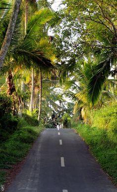 Prendre la route et se perdre volontairement... :) #Bali #palmiers #roadtrip