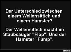 Der Unterschied zwischen einem Wellensittich und einem Hamster? | Lustige Bilder, Sprüche, Witze, echt lustig