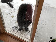 Newfoundland Dogs, Gentle Giant, Shag Rug, Dog Breeds, Decor, Shaggy Rug, Decoration, Blankets, Decorating